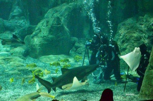 ağzına kadar sokulan balıkları yinede yemeyen köpekbalığı dikkat !!!