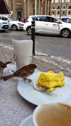 ne diyebilirim bu kuşlar her yerde aynı ;))