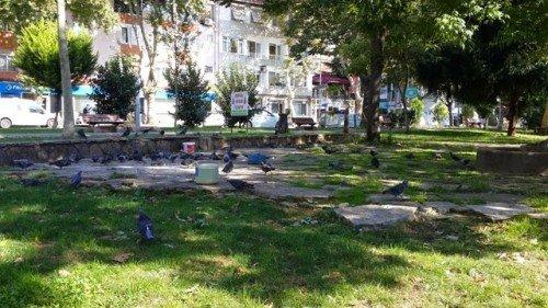 Kuşları Besleme Alanı