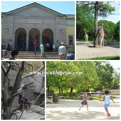 Brookfield Hayvanat Bahçesindeki hayvanlar ve çocukların neşesiii