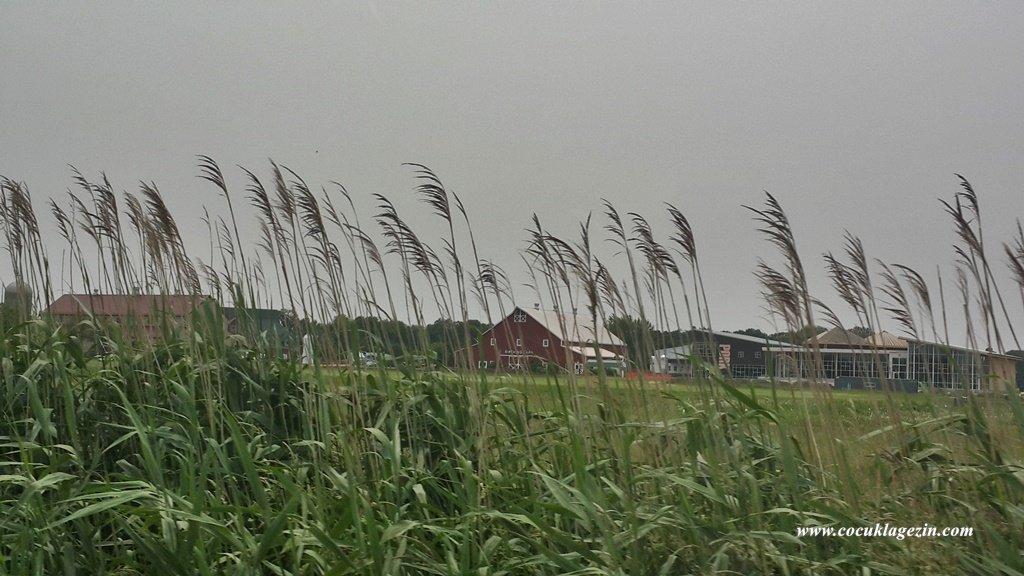 Klasik Amerikan Çiftlikleri, şehirden çıkıp kırsala doğru ilerlediğinizde görebilirsiniz.