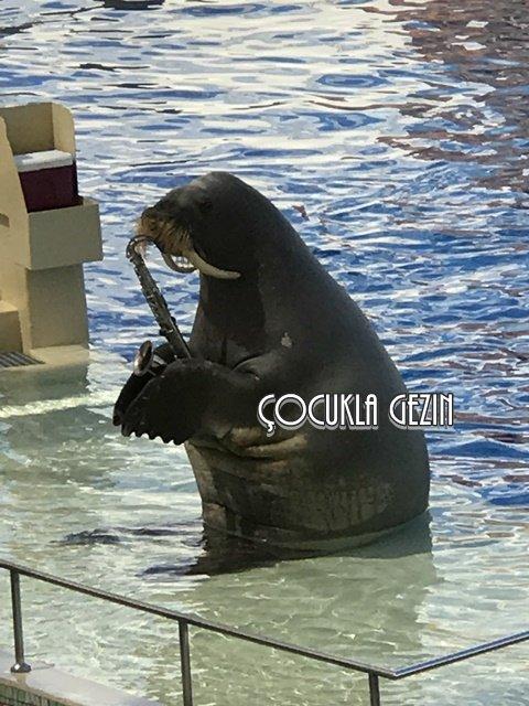 Su parkındaki deniz ayısının konseri çok eğlenceli